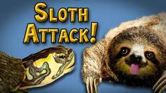Attack of the Sloth