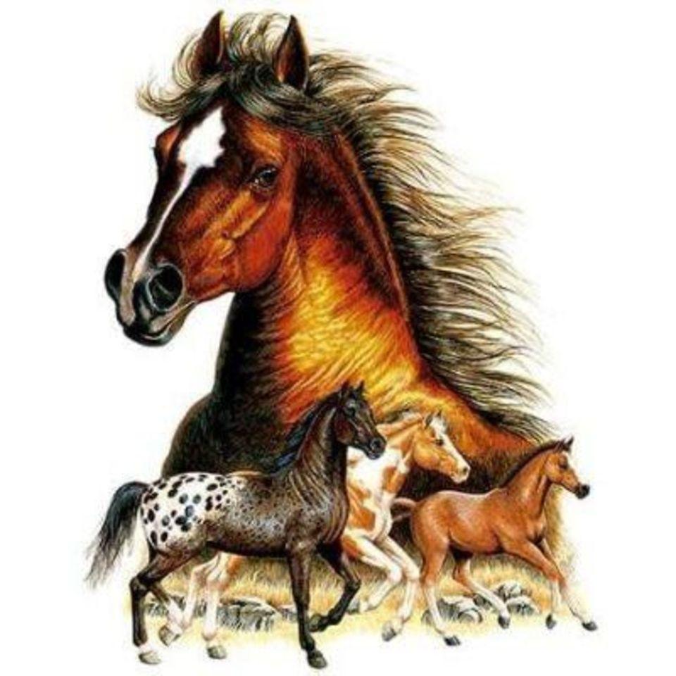 Открытки это конь, папе