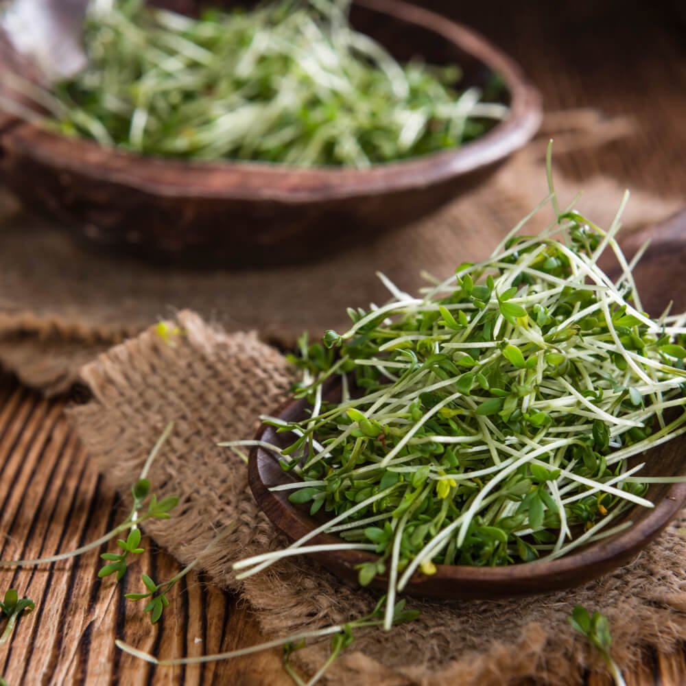 Sprouts/Herbs