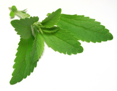 Know Your Herbs- Stevia Rebaudiana