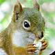 Squirrel –My little friend