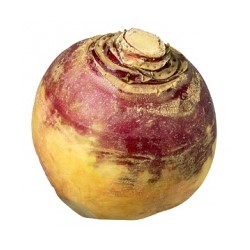 Neeps or turnips></p>  <p>In Scotland this is called a neep or a swede. WHY? Because the King Gustav III of Sweden presented a gold snuff box of Swedish turnip seeds to Patrick Miller (a wealthy Scot from Dalswinton, director of the Bank of Scotland and who just haappened to be a friend of Robert Burns).  The box itself and accompanying letter is now in the British Museum in London. Robert Burns actually rented a farm from Patrick Miller, so Robert Burns may have been an early taster of bashed neeps! This hearty root vegetable grows well in damp Scottish soil. </p>  <p><strong>To Prepare your Rutabaga:</strong> Cut off the thick waxy outer shell, cube it up and boil it just like a potato. When softened, pour off the water and whip the turnip with the addition of lots of butter and white pepper. </p>  <p>So a traditional plate of haggis is served with mashed potatoes and mashed yellow turnips. Some pour on a tot of whisky, or add a sauce (we have several choices - our <a href=