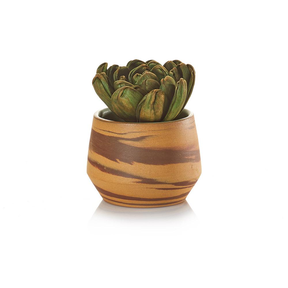Sola Succulent