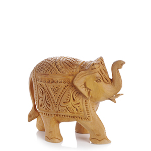 Acacia Indian Elephant