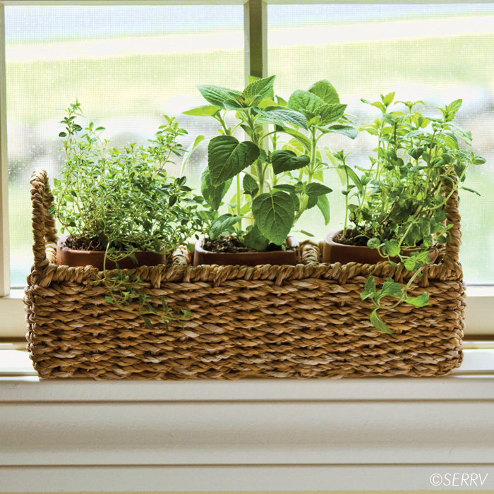 Kitchen Window Herb Planter: Windowsill Herb Planter