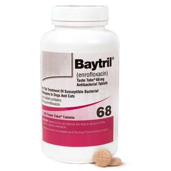 RXV BAYTRIL 68MG 250 TASTE TABS
