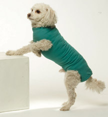 BODYSUIT,VETMED CARE,MEDIUM,MALE