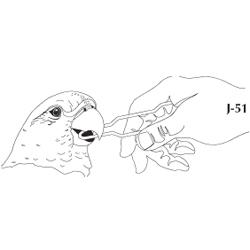 Speculum, avian oral, set of 3