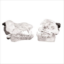 Model, set of clear dental models (J770D & J770F)
