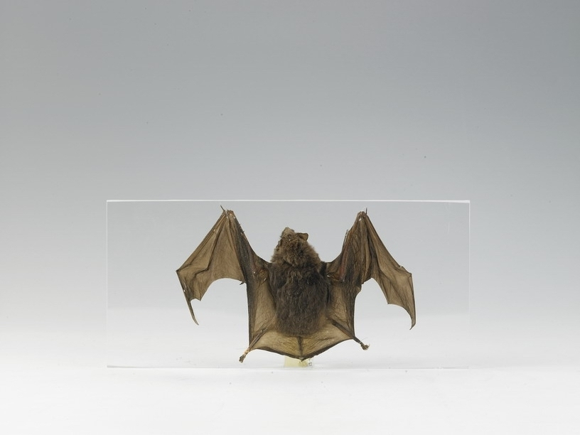 BAT MOUNT,EA