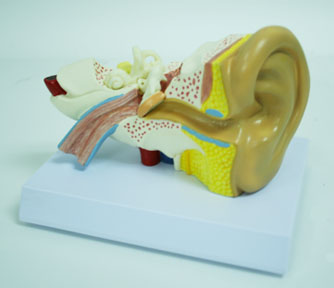 MODEL,SMALL EAR ,EA