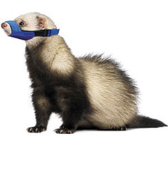 Quick Muzzle For Ferrets, One Size Fits All