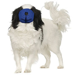 MUZZLES,SMALL/BLUE PUG-NOSED QUICK MUZZLE FOR DOGS