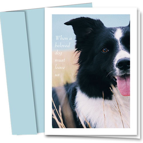 Dog Sympathy Cards - Sleep at God's Feet