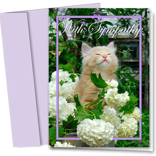 Cat Sympathy Cards - Bright Memories