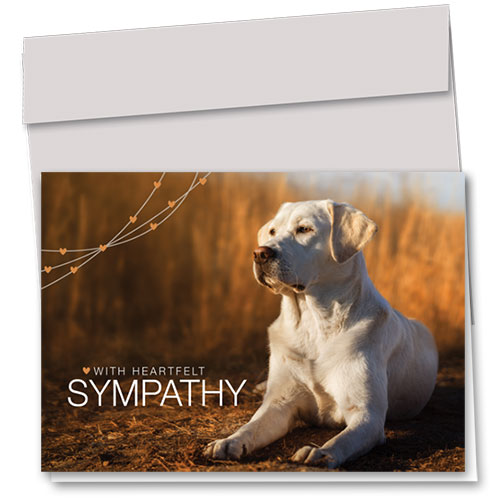 Dog Sympathy Cards - Loyal Lab