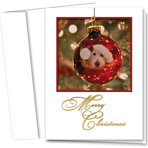 Veterinary Holiday Cards - Holiday Pet Reflections