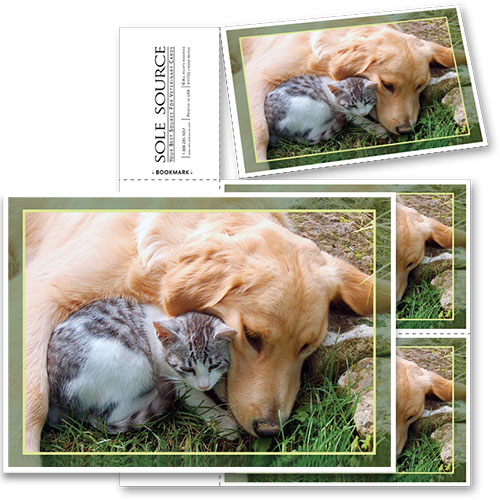 3-Up Veterinary Postcards - Bo & Charlie