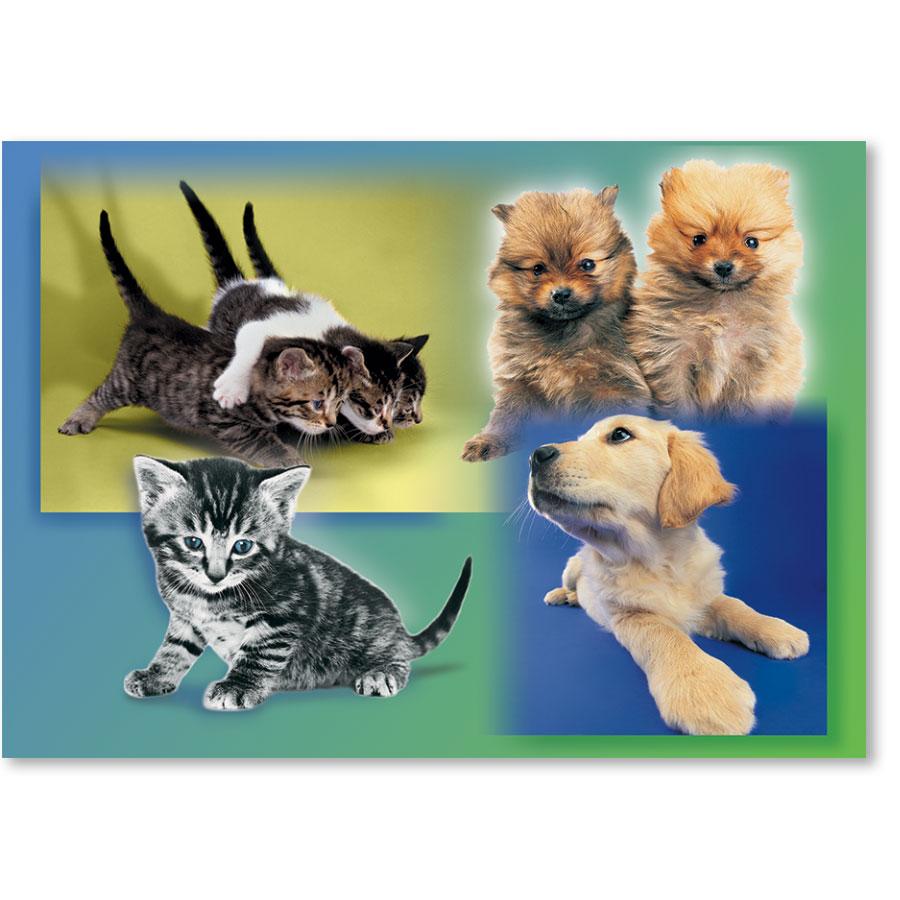 Standard Veterinary Reminder Postcards - Puppies & Kittens