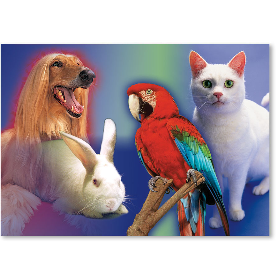 Standard Veterinary Reminder Postcards - Bright Pets