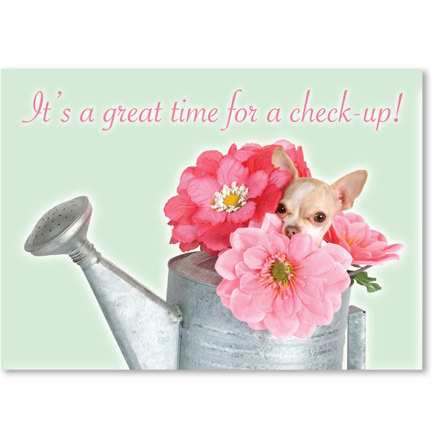 Standard Veterinary Reminder Postcards - Chiquita Bouquet