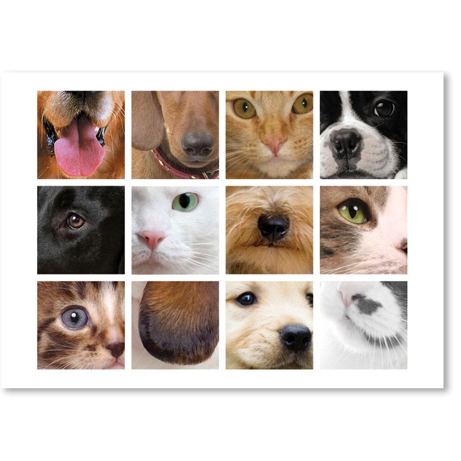 Standard Veterinary Reminder Postcards - Ears, Eyes & Nose