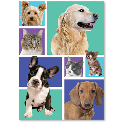 Standard Veterinary Reminder Postcards - Colorblock Pets