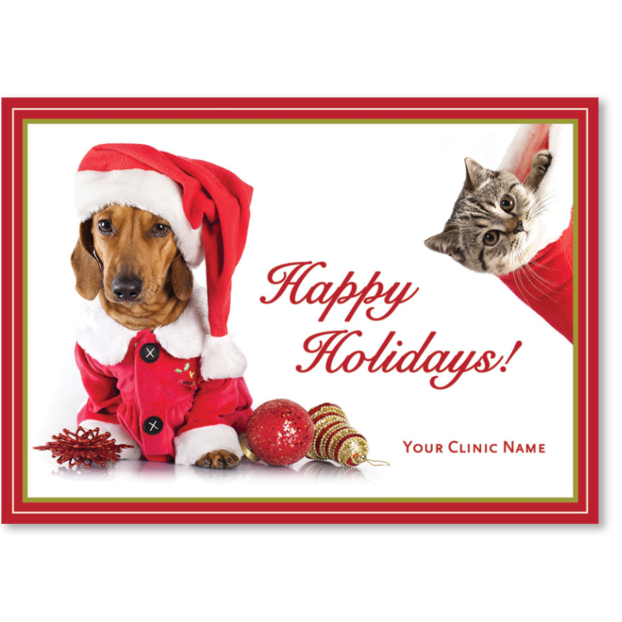 Veterinary Holiday Postcards - Stocking Wonder
