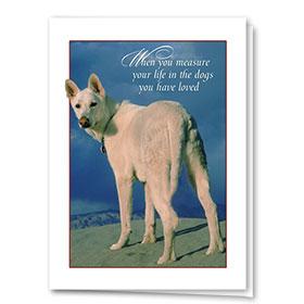 Dog Sympathy Cards - Dogs You Loved