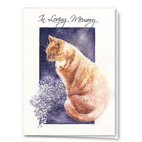 Cat Sympathy Cards - Sunlit Memory