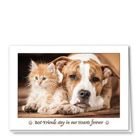 Pet Sympathy Cards - Understanding Eyes
