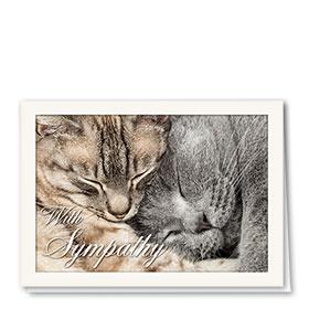Pet Sympathy Cards - Feline Friends
