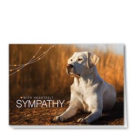 Dog Sympathy Cards - Loyal Lab