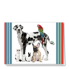 Multi-Purpose Veterinary Cards - Large & Small