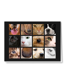 Multi-Purpose Veterinary Cards - Ears, Eyes & Noses