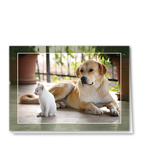 Multi-Purpose Veterinary Cards - Peaceful Afternoon