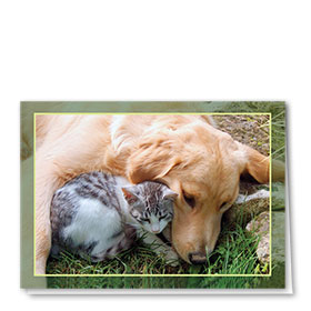 Multi-Purpose Veterinary Cards - Bo & Charlie