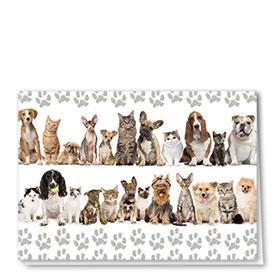 Multi-Purpose Veterinary Cards - Grey Paws