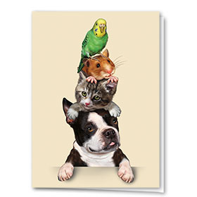 Multi-Purpose Veterinary Cards - Pet Stack