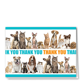 Veterinary Thank You Cards - Line-Up