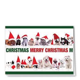 Veterinary Holiday Cards - Christmas Lineup