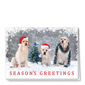 Veterinary Holiday Cards - Three Wise Labs