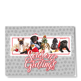 Veterinary Holiday Cards - Festive Group