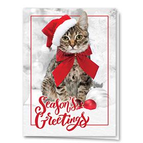 Veterinary Holiday Cards - Festive Feline