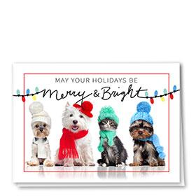 Veterinary Holiday Cards - Bright Lights