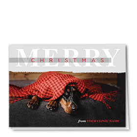 Veterinary Holiday Cards - Snug Doberman