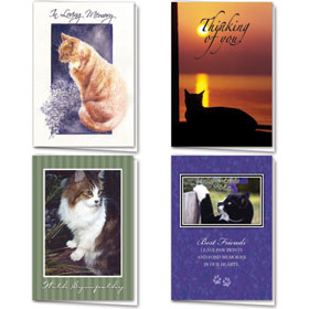 Full-Color Cat Sympathy Cards Assortment Pack - 11