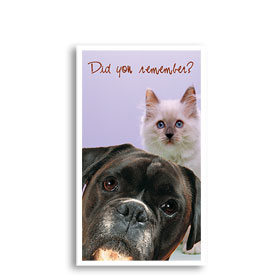 3-Up Laser Veterinary Postcards - Here We Are