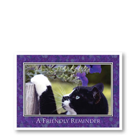 3-Up Veterinary Postcards - Mittens