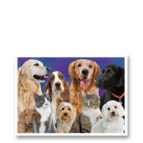 3-Up Veterinary Postcards - Family Portrait